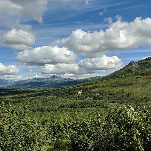 Denali Mountains